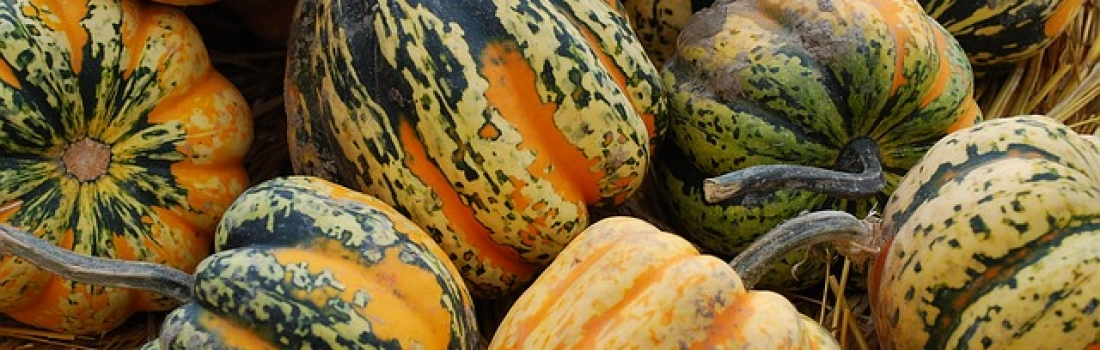 COOKBOOK SERIES: ORANGE HONEYED ACORN SQUASH