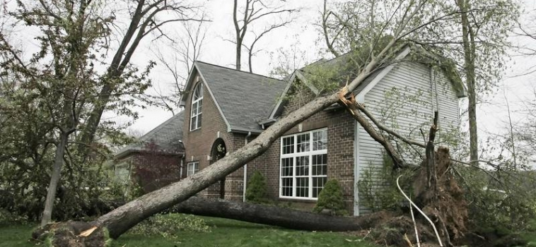 If my tree falls on my neighbor's house, who's insurance might pay for this?