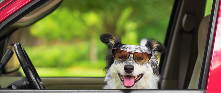 Protect your pets from hot cars